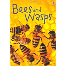 Bees & Wasps (Beginners)