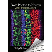 FROM PHOTON TO NEURON