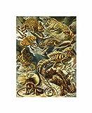 79th Plate Ernst Haeckel Kunstformen Der Natur Lacertilia Poster Print