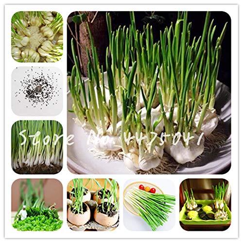 1000 pezzi solo radice scalogno bonsai four seasons evergreen delicious organic scal bonsai pianta idroponica food for flower pot