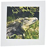 3dRose qs_73121_1 Iguanas 'Eidechse', Cayman Islands,