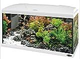Acquario capri 50 led Bianco 40 litri completo di...