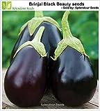 #9: Splendour Seeds Brinjal Black Beauty Seeds (Around 100 Seeds)