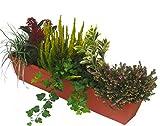 Immergrünes Balkonpflanzen-Set 6 wintergrüne pflegeleichte Pflanzen für Balkonkästen ab 80 cm, Länge