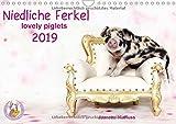 Niedliche Ferkel lovely piglets 2019 (Wandkalender 2019 DIN A4 quer): Kleine Ferkel im Studio (Monatskalender, 14 Seiten ) (CALVENDO Tiere)