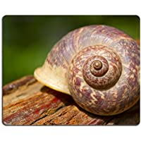 Liili mouse pad Natural rubber Mousepad Image ID: 12862301 Close Up of Shell of Garden snail - Chiocciola Conchiglie