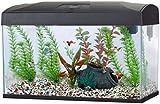 Fish R Fun Rectangular Aquarium, 54 Litre, 58.5 x 30.5 x 38.5 cm, Black