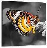 schöner Schmetterling auf Blüte schwarz/weiß, Format: 40x40 auf Leinwand, XXL riesige Bilder fertig gerahmt mit Keilrahmen, Kunstdruck auf Wandbild mit Rahmen, günstiger als Gemälde oder Ölbild, kein Poster oder Plakat