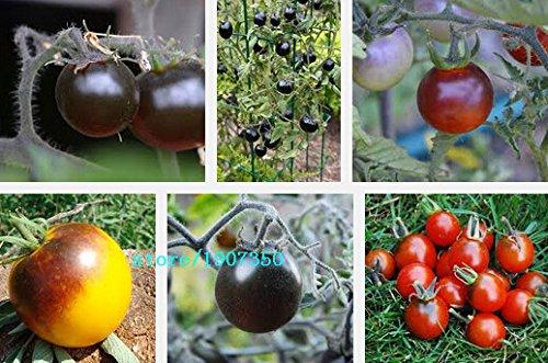 100pcs/lot de l'héritage Rose Oxheart tomate semences graines de légume en pots de fleurs jardin maison