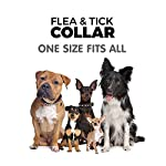 flea and tick collar for dog cat, 8 months protection in safety ingredients control, premium care with two tick remover tool to remove fleas, ticks, lice and mosquitos Flea and Tick Collar for Dog Cat, 8 Months Protection in Safety Ingredients Control, Premium Care with Two Tick Remover Tool to Remove Fleas, Ticks, Lice and Mosquitos 51vMgVng1jL