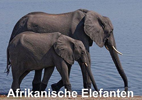 Afrikanische Elefanten (Tischaufsteller DIN A5 quer): Faszinierende Aufnahmen afrikanischer Elefanten (Tischaufsteller, 14...