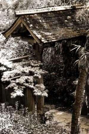 feelingathome-stampa-artistica-x-cornice-bamboo-garden-ii-cm82x54-arredo-poster-fineart