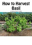 How to Harvest Basil (English Edition)