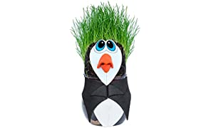Toiing Plantoi Paco The Penguin Unique Gift Plant Toy That Grows Real Grass