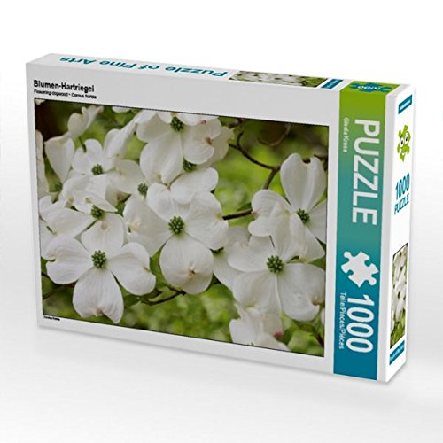 Blumen-Hartriegel 1000 Teile Puzzle quer (CALVENDO Natur) (Hartriegel-blumen)
