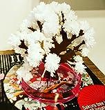 Hanami Baum Magische Magic Sakura, weiß