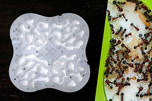 Le Pack du Parfait Fourmiculteur - avec Fourmilière Quadricity pour observation des Fourmis