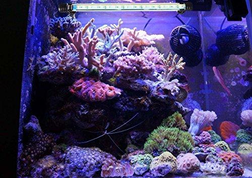 Glighone lampada per acquario led rgb illuminazione per