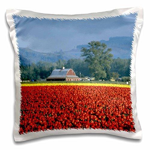 danita-delimont-farms-washington-state-skagit-valley-tulip-farm-us48-dbn0038-david-barnes-16x16-inch