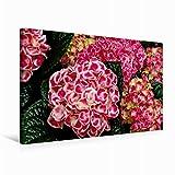 Premium Textil-Leinwand 75 cm x 50 cm quer Bauernhortensie | Wandbild, Bild auf Keilrahmen, Fertigbild auf echter Leinwand, Leinwanddruck