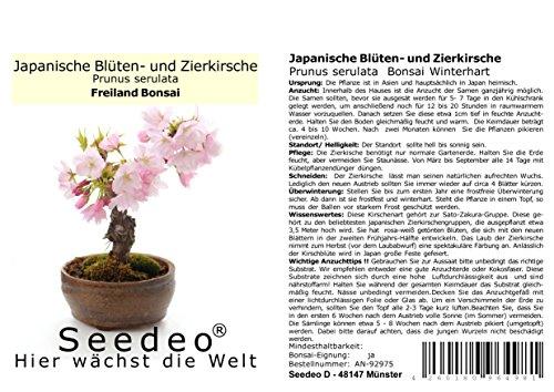 Seedeo Bonsai Geschenk – Set Japanische Blüten- und Zierkirsche (Prunus serulata)