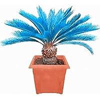WuWxiuzhzhuo - 100 Semillas de árbol de Palmera de Sago Azul, para Decoración de Jardín, de Cycad Bonsai