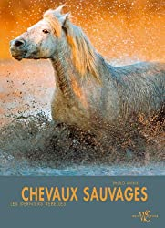 Chevaux sauvages