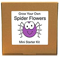 Grow Your Own Cleome Spider Flowers Kit - Unusual, Unique and Quirky Complete Beginner Friendly Indoor Gardening Gift for Men, Women or Children