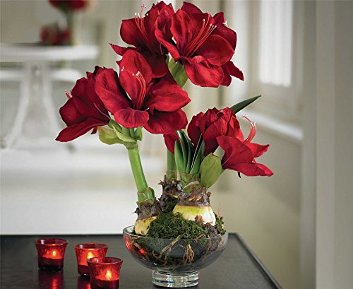 Bloom Red Triple Amaryllis Artificial Flower Silk Glass Vase Pot Decoration