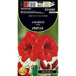 Semillas Batlle 076852Bols - Bulbo Amarillis Rojo