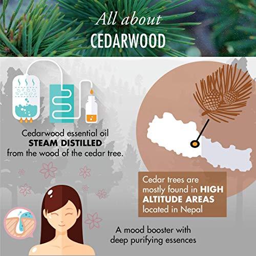 Zoom IMG-3 legno di cedro cedarwood nepal