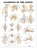Anatomical Chart Ligaments of the Joints