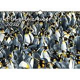 Pinguinzauber DIN A3 Kalender 2020 Pinguin und zusätzlich 1 Grußkarte - Seelenzauber