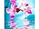 Fototapete Pink Orchid in verschiedenen Größen - als Papiertapete oder Vliestapete wählbar - PVC frei, geruchloser, umweltfreundlicher Latexdruck ohne Lösemittel - Motivtapete Postertapete Bildtapete Wall Mural von Trendwände -