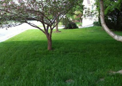 5-kg-shady-area-under-trees-lawn-grass-seed-shade-supplied-by-perfect-lawns
