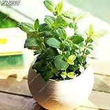 IDEA HIGH Seeds-ZLKING 200 PCS Die ältesten Landpflanzen Fern Bonsai Indoor Bonsai Wichtige Verschönerung Pharmazeutisch verträgliches essbares: 200Fern7