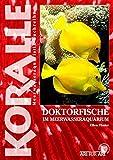 Doktorfische: Im Meerwasseraquarium (Koralle)