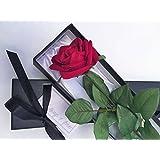 "Single Stem Red Valentine Rose in a Silk Lined Black Presentation Gift Box including "" Always & Forever "" Gift Card. (Sassi)"