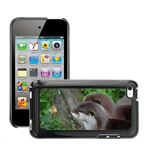 Grand Phone Cases Bild Hart Handy Schwarz Schutz Case Cover Schale Etui // M00142577 Otter Nahaufnahme Kopf Säugetier Zoo // Apple ipod Touch 4 4G 4th (Otter-hülle Für Ipod 4)
