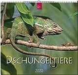 Dschungeltiere: Original Stürtz-Kalender 2020 - Mittelformat-Kalender 33 x 31 cm -