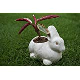 [Sponsored]Culstreet Ceramic White Colored Hand Crafted Miniature Rabbit Plant Container (Set Of 2)