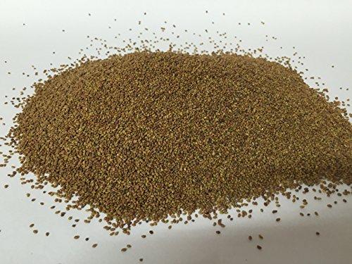 Preisvergleich Produktbild Bio Alfalfa Luzerne Keimsaat - Sprossensamen für die Zucht von Alfalfasprossen - der natürliche Energiespender - lecker in Salaten - Inhalt: 1 kg Alfalfa Samen