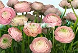 3408-8941 Gentle Rosé - Papel con impresión fotográfica para pared (8 partes,  368 x 254 cm), diseño de rosas