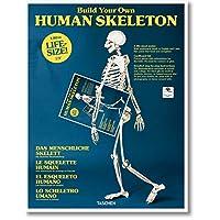 Build Your Own Human Skeleton - Life Size!