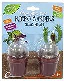 Bauen Sie Ihr eigenes an Fleischfressende Pflanzen Venus Fliegenfalle & Kaktus Kinder Mikro Garten Set