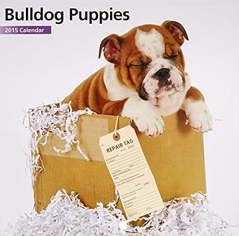Bulldog Puppies 2015 Mini Calendar