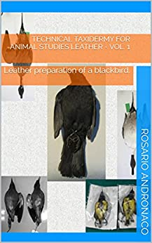Technical taxidermy For animal studies Leather - Vol. 1: Leather preparation of a blackbird. by [Andronaco, Rosario]