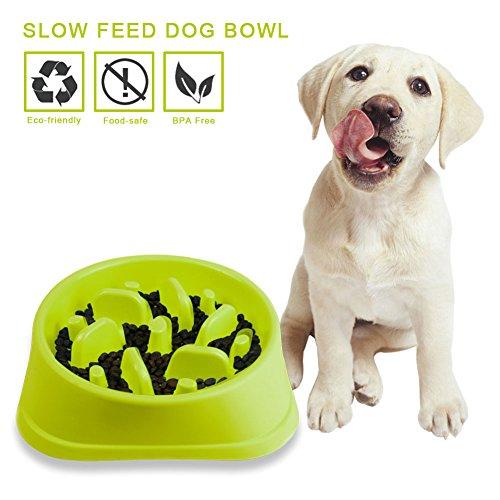 Coupon Matrix - Decyam Pet Fun Feeder Dog Bowl Slow Feeder, Bloat Stop Dog Food Bowl Maze Interactive Puzzle Cat Bowl Non Skid (GREEN)