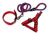 AUTULET XSmall Zwei Tone Hundeleinen führen 5 Fuß lang und schweres Nylon Hundegeschirr & abgefedert Hundehalsband (3 Stück)