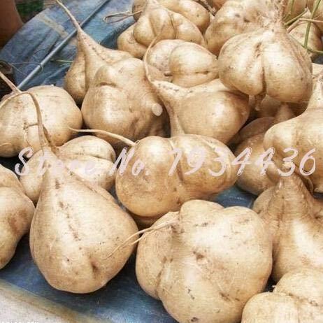 pinkdose 6 pc/sacchetto di patate dolci jicama/yam bean giardino frutta e verdura bonsai pot di trasporto rapida crescita delle piante cortile